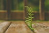 """Ignore me at your peril (Tracey Rennie) Tags: fern sechelt eleven rain """"52 week challenge"""" flickrcation"""