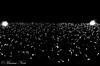 Holidays light (Marwa Noci) Tags: bw milano milan