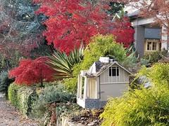 Walks Piedmont Park - 41 (Laura Grace) Tags: 2017 afternoon atl atlanta autumn beauty fall ga georgia november solowalkshikes virginiahighland walksandhikes
