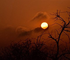 Morning Mood (The Spirit of the World) Tags: mood atmosphere tree sun sunlight sunrise safari gamedrive gamereserve morning dawn clouds sky southafrica africa landscape light silhouettes