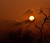 Morning Mood (The Spirit of the World ( On and Off)) Tags: mood atmosphere tree sun sunlight sunrise safari gamedrive gamereserve morning dawn clouds sky southafrica africa landscape light silhouettes