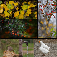 3 dicembre 2017 (adrianaaprati) Tags: collage month december autumn leaves landscape bokeh yellow red goose geese bushes bird birds fountain smallfountain park