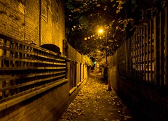 Leafy Lane Before Dawn (armct) Tags: dark dawn night streetlight lattice park london wandsworthcommon perspective narrow bare deciduous winter fall autumn leafy leaves laneway lane sundaylights