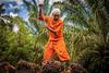 Oil palm in Brazil (CIFOR) Tags: economics landtenure landuse livelihoods income localpeople biofuels people males householdexpenditure men socioeconomics landclearance bioenergy oilpalms employment deforestation communityforestry landmanagement biodiesel employmentopportunities plantations householdincome santarém pará brazil br