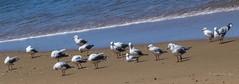 Down time (idunbarreid) Tags: seagulls beach