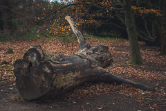 DSC_0134 (Understudy Photography) Tags: nationaltrust nature architecture christmas polsden polsdenlacey kent dorking surrey london guilford decoration natural polesdenlacey landscape autumn winter fall england scenery history detail nikon photography atmosphere