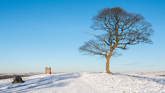 A winter's walk (Maria-H) Tags: stockportdistrict england unitedkingdom gb tree snow winter lymepark lymecage disley cheshire uk olympus omdem1markii panasonic 1235