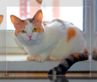 My cat Kitcy