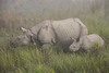 One-horned Rhino - With Baby (Barbara Evans 7) Tags: onehorned rhinoceros with baby kaziranga national park assam india barbara evans7
