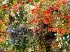 Hanging garden (EvelienNL) Tags: flower flowers bloemen orchideeënhoeve luttelgeest garden hanging tuin hangendetuin zwevendetuin hangende planten plants colourful kleurrijk dutch holland netherlands indoor