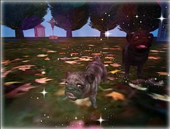 Cosmo and Wanda (Lunetta Darkpulse) Tags: jian pugs gatcha lovepugs animals cute furry critter edit people secondlife