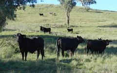 Crow Mountain Road, Barraba NSW