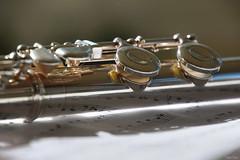 Quelques notes de musique (martine_ferron) Tags: musique flutetraversière instrumentdemusique notes reflets