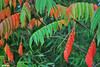 Antomne (Masse W.) Tags: nature automne couleur feuille feuillage bambou sumac jardin 49 anjou loire