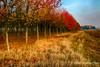 Periferia città (AL) #Explore# (Gianni Armano) Tags: periferia città alessandria piemonte italia autunno alberi colori foto gianni armano photo flickr