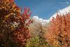 AUTUMN (hisalman) Tags: hunza ultar sar peak moutain northern areas pakistan autumn travel weather nature
