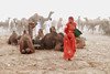 Pushkar_35_2017 (dr.subhadeep mondal's photography) Tags: streetphotography desert travelphotography travel woman color colorsofrajasthan india people public pushkar pushkarfair pushkarfair2017 rajasthan camel fair canon canon800d candid subhadeepmondalphotography sand