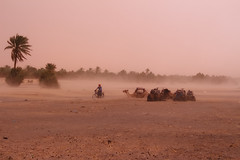 Sandstorm (T is for traveler) Tags: traveling travel traveler tisfortraveler digitalnomad photography backpacker exploration explore desert sand africa morocco merzouga summer trip people landscape biker bike canon 700d 1855mm sandstorm camel palmtrees wind weather