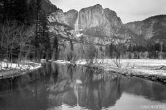 (Nick Kanta) Tags: bw blackandwhite california d90 meadow monochromatic nationalpark nikon outdoorphotography reflection river tamron1750 trees water waterfall yosemitefalls yosemitenationalpark yosemitevalley
