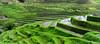 Manmade fields (frata60) Tags: nikon indonesia indonesië bali sawa rijstveld ricefields rice rijst manmade fields