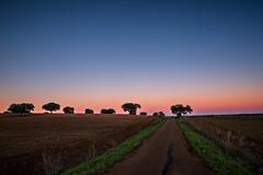 Alentejo (Daniel Caridade) Tags: trees sunset road colors portugal cores nightfall estrada árvores alentejo sobreiro anoitecer chaparro campo maior pordosol