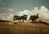 Five friends (Argyro Poursanidou) Tags: landscape tree cloud sky fence nature five friends