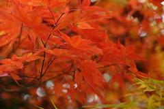fuji 11-17 006 (carlo612001) Tags: autunno alberi foglie colori arancio giallo autumn trees leaves colors color orange jellow natura nature fuji1117 fuji xt 2 fujixt2 fujifilmxt2