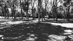 Parque Barigui (antonyluis) Tags: parquebarigui pb xiaomimi6 curitiba paraná brazil parque dialindo xiaomi mi6 dslr