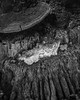 DSC_1143.jpg (ruud.snijders) Tags: forrest rozendaal paddestoelen montfort fall bos mushrooms herfst