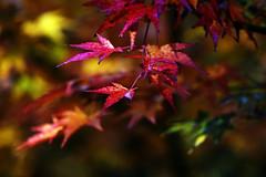 HerbstStillLeben (Michael Döring) Tags: gelsenkirchen bismarck zoomerlebniswelt zoo herbststillleben afs200500mm56e d850 michaeldöring inexplore