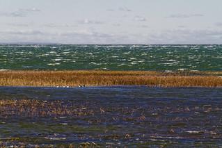 Wind Blown Bay