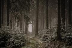 Legend (PetschoX5) Tags: petscho freedomstreaming canon 700d photography fotografie myst legend germany deutschland schnee snow white weiss green forest baum bäume tree