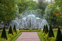 6Z8A2062.jpg (TravelerRauni) Tags: continentsetpays europe russie stpetersburg couleurs nature parc paysage vert