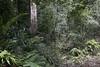 El bosque monzónico (ramosblancor) Tags: naturaleza nature paisaje landscape bosque forest selva jungle tropicalforest bosquetropical bosquemonzónico monsoonforest árbol tree tronco trunk giant gigante biodiversidad biodiversity exuberancia exhuberance khaoyai tailandia thailand