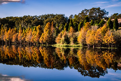 perfect reflection (MJ6606) Tags: grass autumn landscape mirror nature water outdoor lake fall florida morning wildlife tree river forest flowersplants sky park reflection panorama clouds