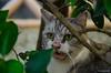 She Said Mew (snakecats) Tags: 京都市 京都府 日本 jp ねこ 猫 ネコ cat straycat 野良猫 伏見区 fushimiward fushimiku kyoto 京都 japan 緑 green
