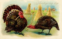 Turkeys Breaking the Wishbone on Thanksgiving Day (Alan Mays) Tags: ephemera postcards greetingcards greetings cards paper printed thanksgiving holidays november turkeys birds poultry animals anthropomorphic anthropomorphism wishbones wishes bones cannibals cannibalism wheat sheaf sheaves fields farms strange unusual bizarre illustrations borders yellow brown red 1908 1900s antique old vintage typefaces type typography fonts raphaeltucksons raphaeltuck tuck postcardpublishers thanksgivingseries postcardseries