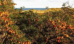 havtorn (kadege59) Tags: nature danmark seascape wonderfulnature wow canon colours autumn