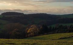 In the Eifel (Netsrak) Tags: eifel europa rheinbach deutschland landschaft natur baum bäume wald wiese licht schatten dunst