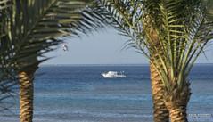 Sea view (Artur Rydzewski) Tags: water tree ocean beach sea palmtree coast outdoor flora palm boat vacation nature shore flying outdoors tropics tropical blue traveling board