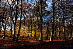 Edzell Woods 17 Nov 2017 18.jpg (JamesPDeans.co.uk) Tags: autumn plants gb greatbritain prints for sale season unitedkingdom nature digital downloads licence scotland aberdeenshire trees woods wwwjamespdeanscouk colour man who has everything britain landscapeforwalls europe uk james p deans photography digitaldownloadsforlicence jamespdeansphotography printsforsale forthemanwhohaseverything