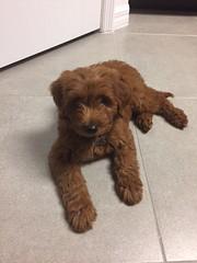 Ruby Red's sweet Ruby at 8 weeks!