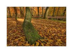 Autumn Liesbos (cees van gastel) Tags: ceesvangastel canoneos550d sigma1020mm autumn herfst bomen trees liesbos breda liesbosbreda herfstkleuren autumncolours natuur nature landscape landschap noordbrabant nederland netherlands