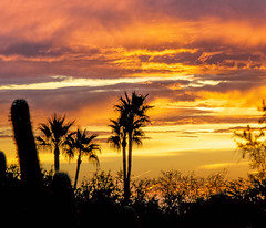 Sunrise Over Phoenix (f/ames) Tags: sunrise palmtrees sky colors beautiful cactus phoenix arizona canon5d mkii