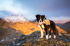 Crazy Eyes (svensl) Tags: crazy eyes scotland schottland highlands hills winter sunrise dog border collie canine portrait hill walking