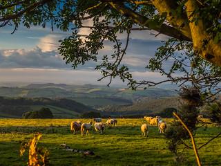 The creatures of Dartmoor...