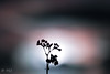Blur & sharp (mathieuo1) Tags: mucangchai vietnam blur sharp plant flower nature fineart art artistic macro micro sunset sunbathing sun light illumination straight raw front form shape shadow composition branch tree travel explore discover nikon zoom outdoor mountains landscape scape vision work design smooth soft mathieuo