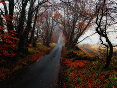 Wee foggy road (xDigital-Dreamsx) Tags: autumn rural red road country fog weather nature naturephotography landscape leaves trees atmosphere silhouette november fall path track wet coth5