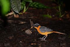 breakfast time (Siggital) Tags: vogel bird animal tier nature naturephotography