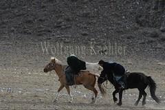 30101775 (wolfgangkaehler) Tags: 2017 asia asian centralasia mongolia mongolian westernmongolia ulgii ölgii bayanulgiiprovince altaimountains altaymountains altaymts goldeneaglefestival people person kazakh competing competition competitor game games horse horseriding horseback horsebackriding horsebackrider traditionalgame kukhbar fighting goatskin kokpar
